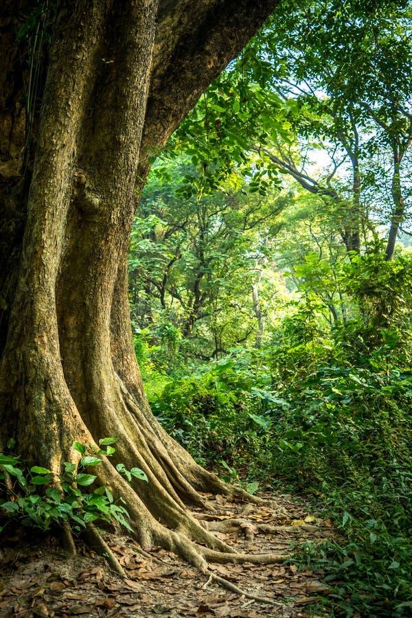 Download Baum stockfoto. Bild von betrieb, wald, riesig, garten - 96933670