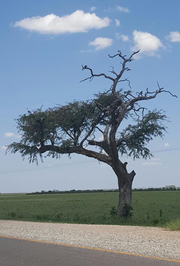 Baum in Afrika stockfotografie