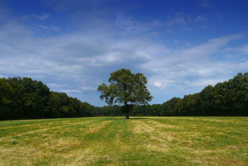 Download Baum Alleine Auf Dem Gebiet Stockbild - Bild von einsam, baum: 26372559
