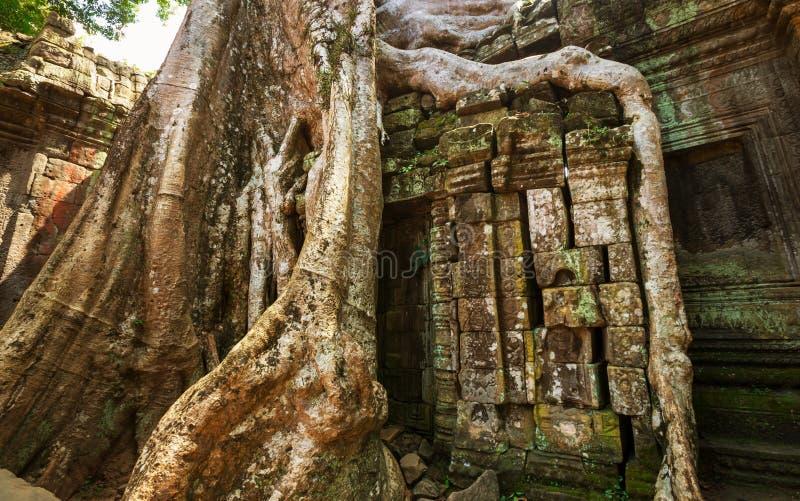 Baum in Angkor stockbild