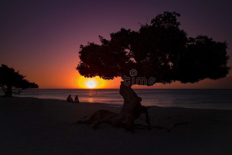 Baum Arubas Divi Divi bei Sonnenuntergang stockfotografie