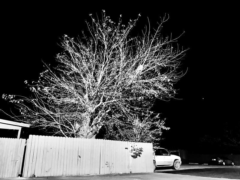 Baum Außerhalb Des Hauses Kostenlose Öffentliche Domain Cc0 Bild