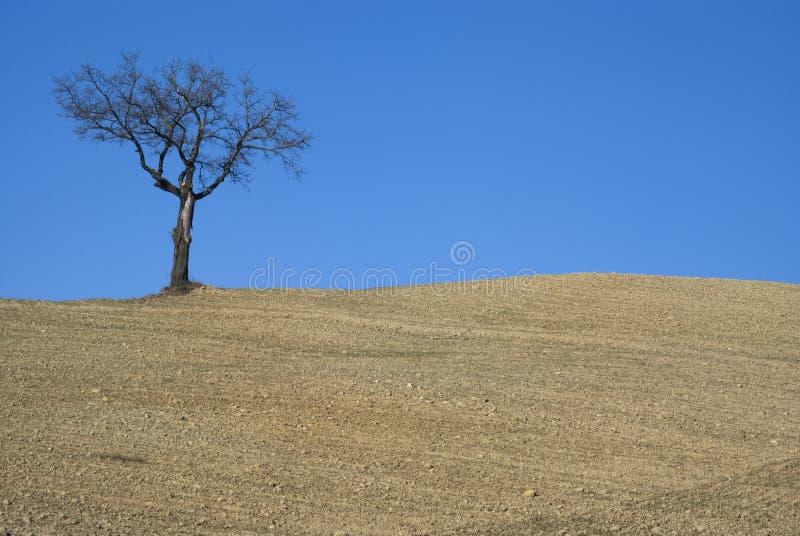 Baum auf Ackerland stockfoto