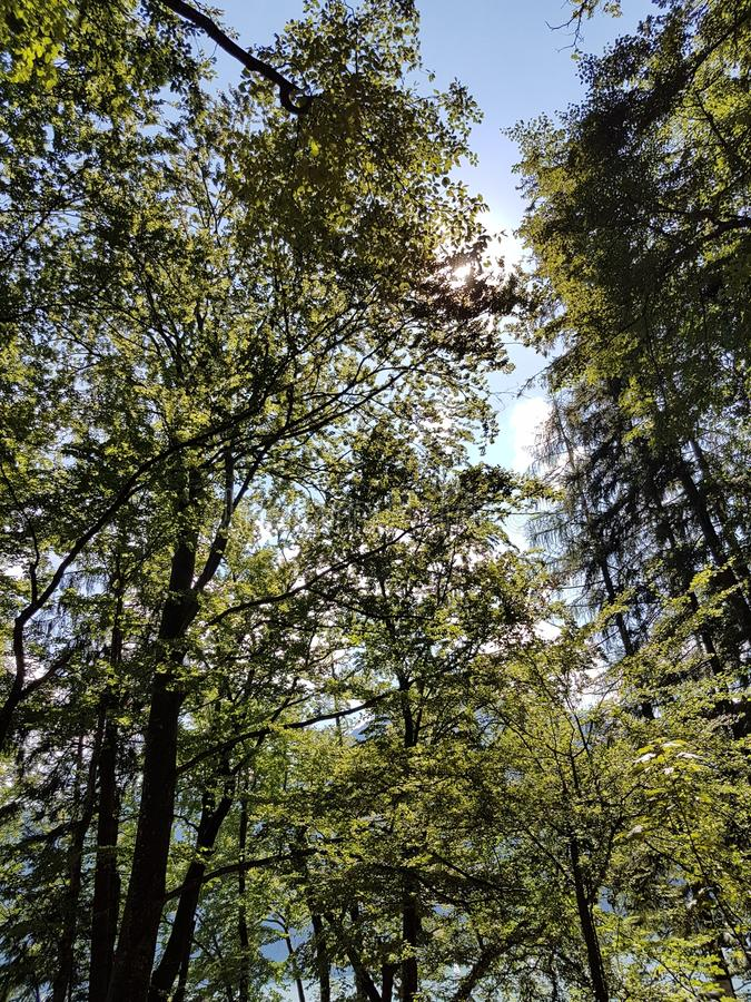 Baum auf dem Gebiet stockfoto