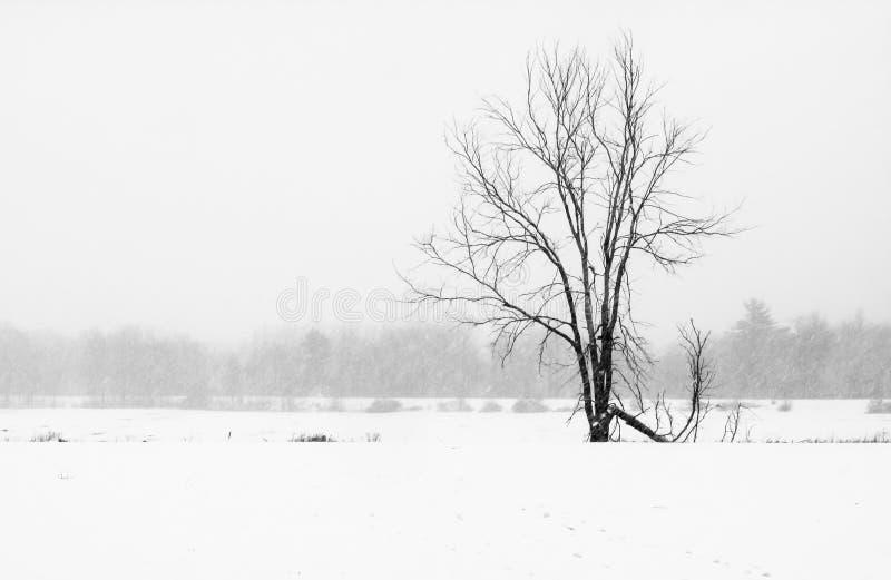 Baum auf dem Gebiet mit Schneesturm lizenzfreie stockfotos