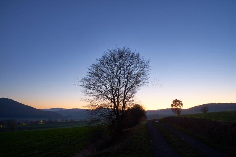 Baum auf dem Schotterweg im Sonnenuntergang lizenzfreie stockbilder