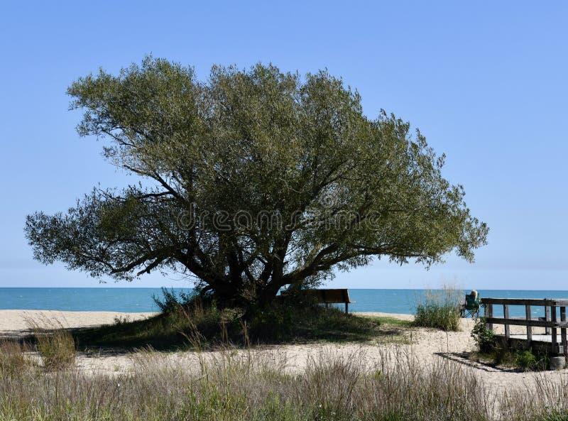 Baum auf dem Strand lizenzfreie stockfotografie