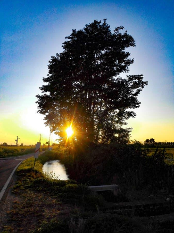 Baum auf dem Ufer lizenzfreies stockbild