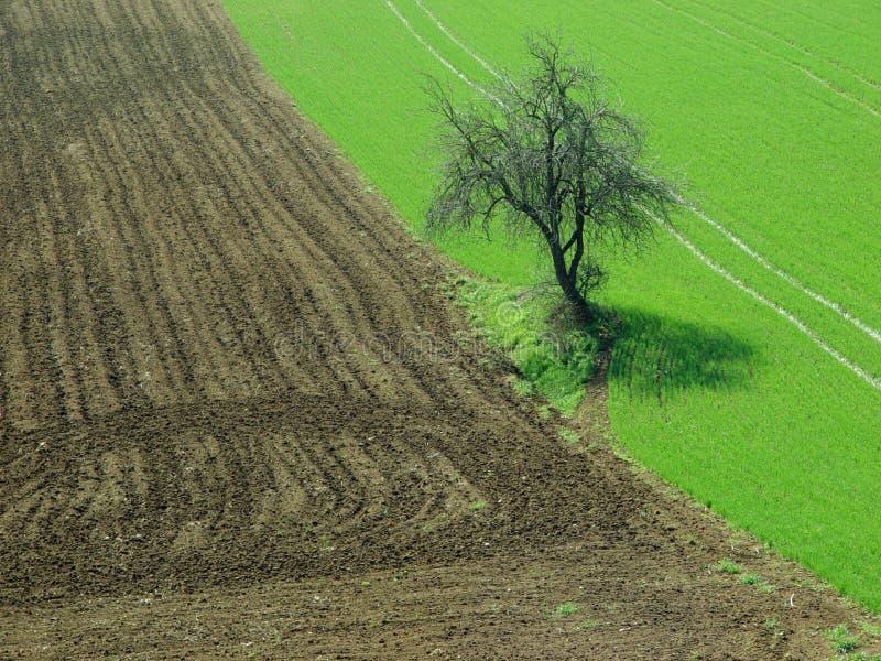 Baum auf den Gebieten stockbild