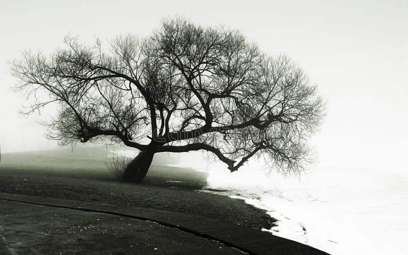 Baum auf der Flussquerneigung lizenzfreie stockfotografie