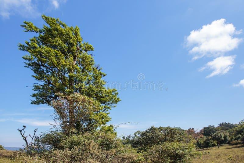 Baum auf der Gebirgshügelklippe im Wald stockfotos