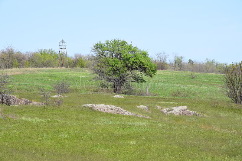 Baum auf der Insel von Khortytsya in Zaporozhye stockfotografie