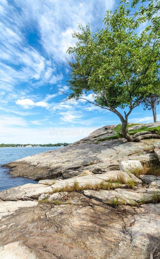 Baum auf der Küste von Connecticut stockbild