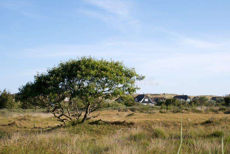 Download Baum auf der Wiese stockbild. Bild von baum, himmel, blau - 6998373
