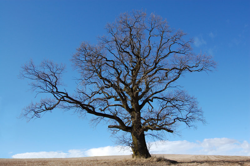 Baum auf einem Gebiet stockbilder