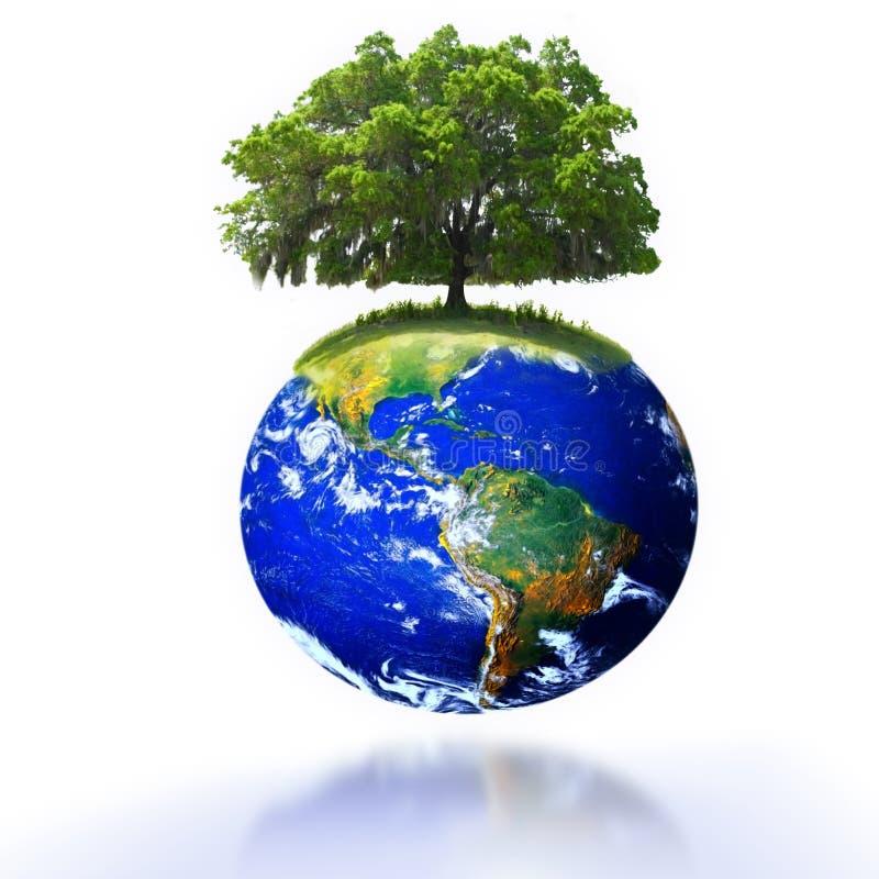 Baum auf Erde lizenzfreie stockfotos