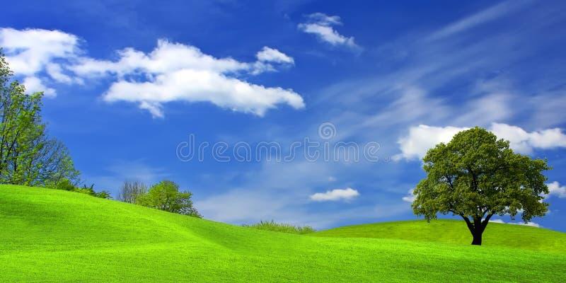 Baum auf grünem Feld stockfotografie
