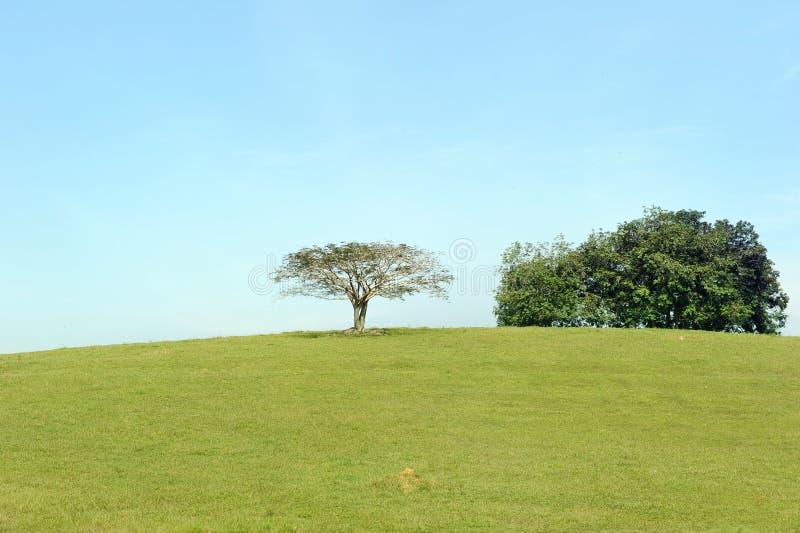 Baum auf Hügel stockbild
