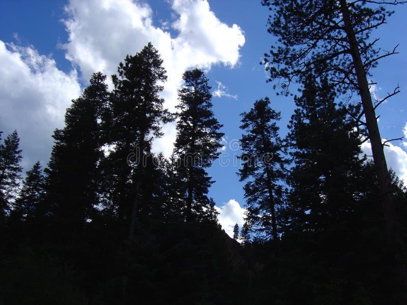 Baum auf Himmel stockbilder