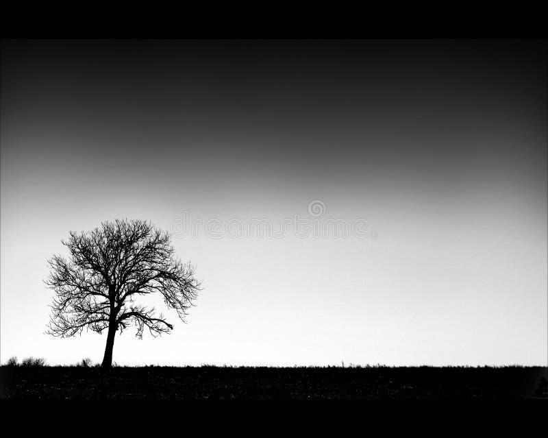 Baum auf Horizont stockbilder
