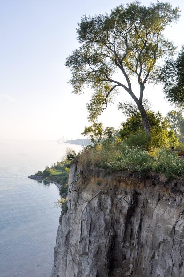Baum auf Rand der Klippe und der Ontariosee- - Scarborough-Täuschungen - Toronto stockfotografie