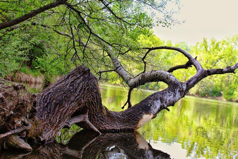 Baum auf See lizenzfreie stockbilder
