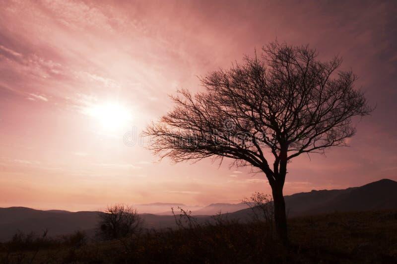 Baum auf Sonnenuntergang lizenzfreie stockfotografie