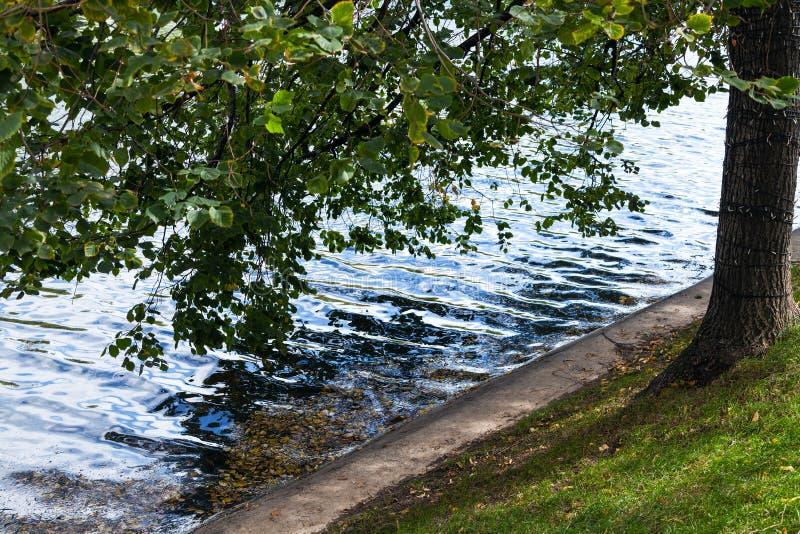 Baum auf Ufergegend von sauberen Teichen in Moskau lizenzfreie stockfotos