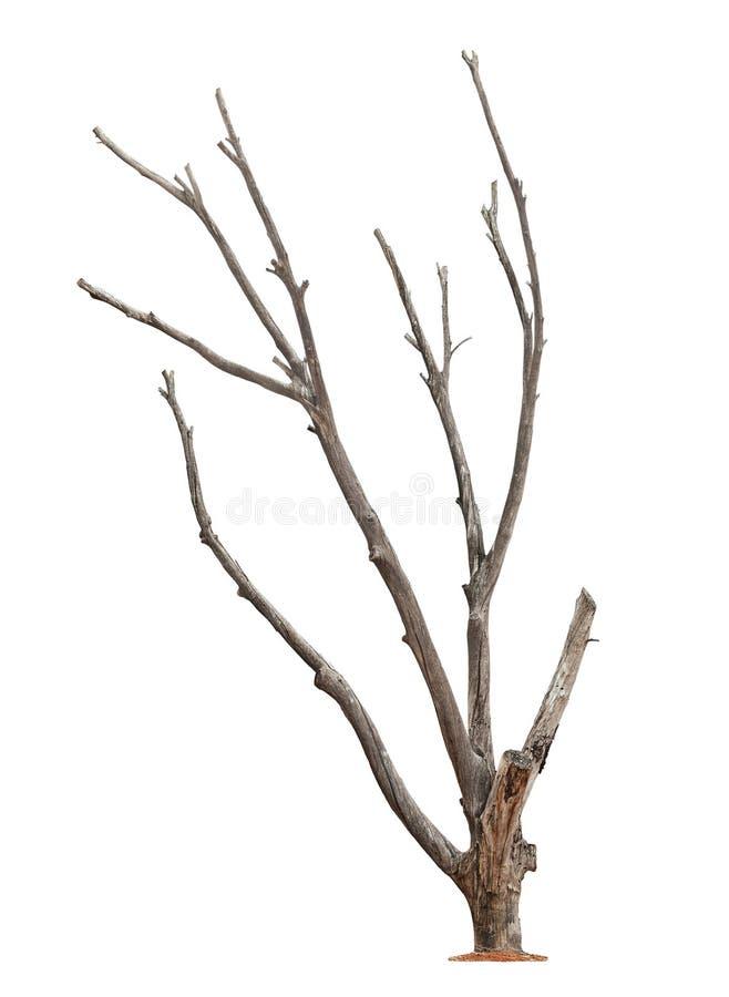 Baum auf weißem Hintergrund lizenzfreie stockfotografie