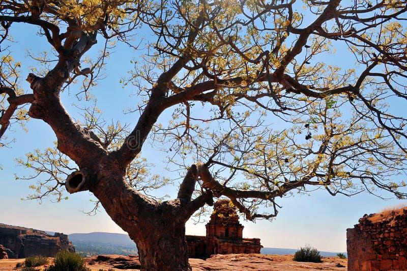 Baum aus Felsen heraus lizenzfreie stockfotografie