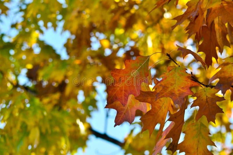 Baum, autum Farben, Laub lizenzfreie stockfotografie