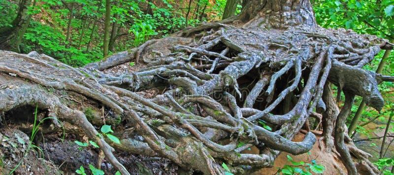 Baum avobe alles stockbild