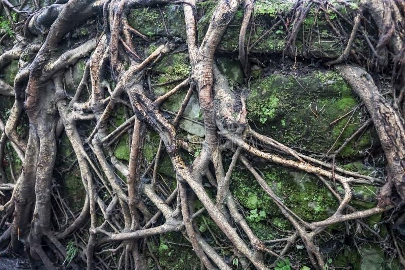 Baum avobe alles stockfotografie