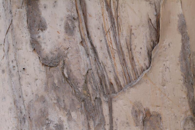 Baum-Barke stockfoto