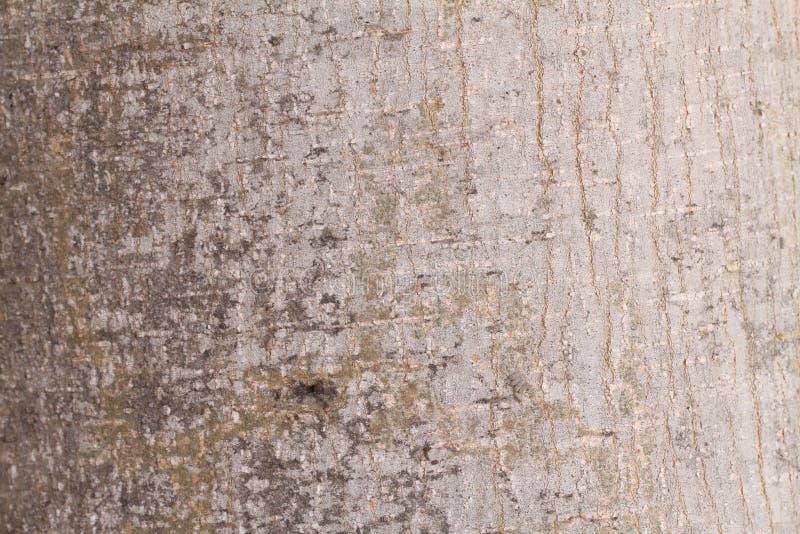 Baum-Barke lizenzfreies stockfoto