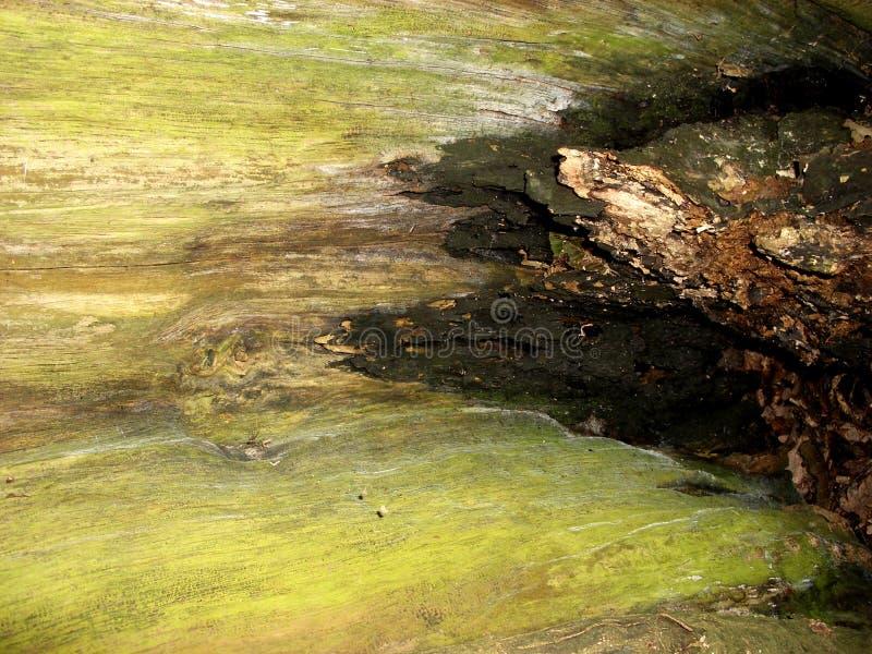 Baum-Barke 14 lizenzfreie stockbilder