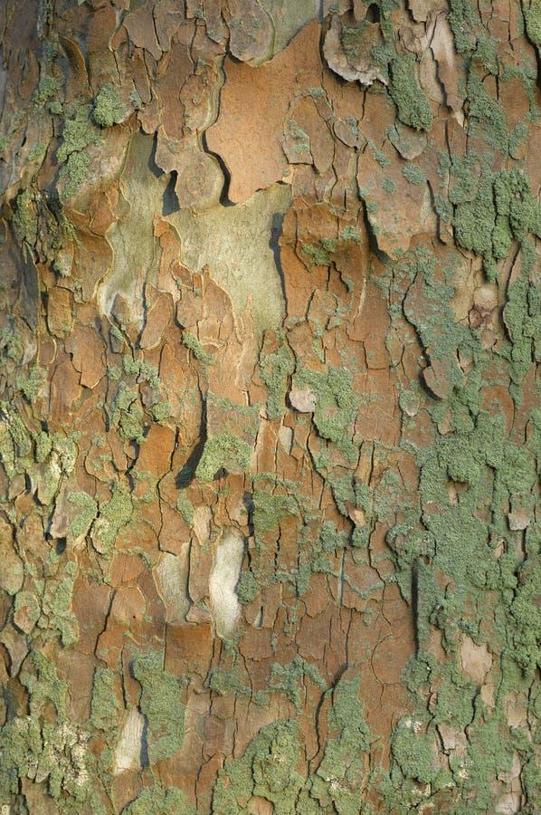 Baum-Barke lizenzfreie stockfotos