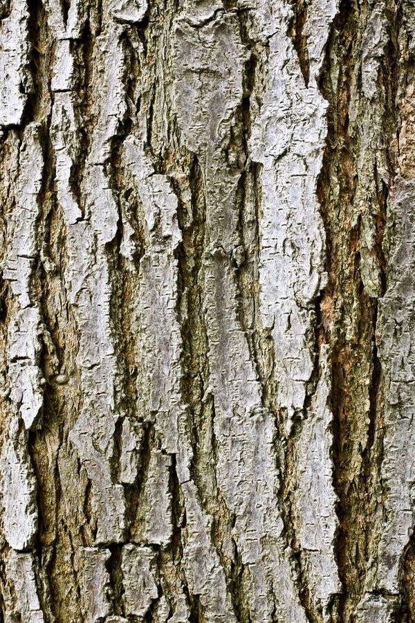 Baum-Barke-Beschaffenheit stockfoto