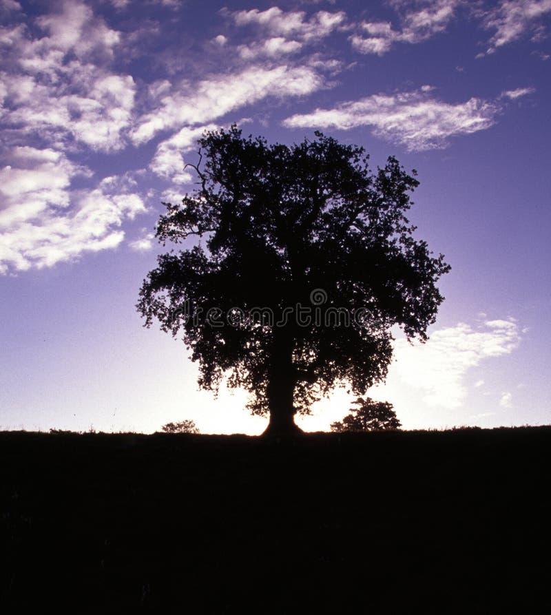 Baum am betchworth lizenzfreie stockfotografie