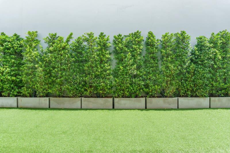 Baum-, Betonmauer- und Grasboden lizenzfreie stockbilder