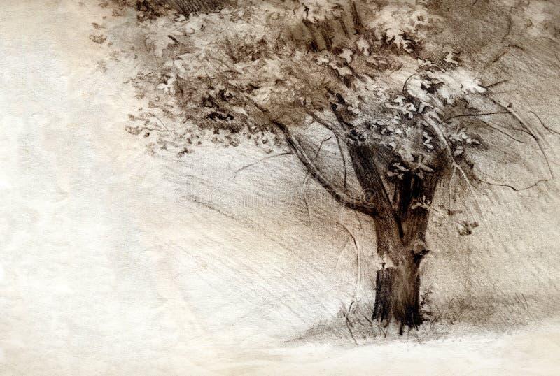 Baum Bleistift-Zeichnung auf Papier lizenzfreies stockbild