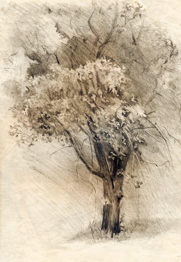 Baum Bleistift-Zeichnung auf Papier lizenzfreies stockfoto