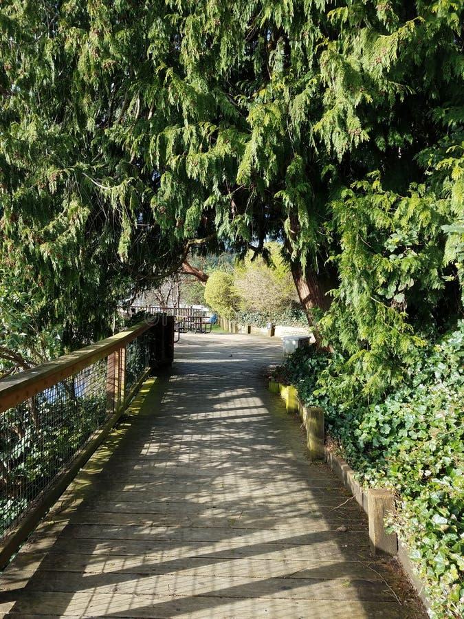 Baum-Bogen im Frühjahr stockfoto
