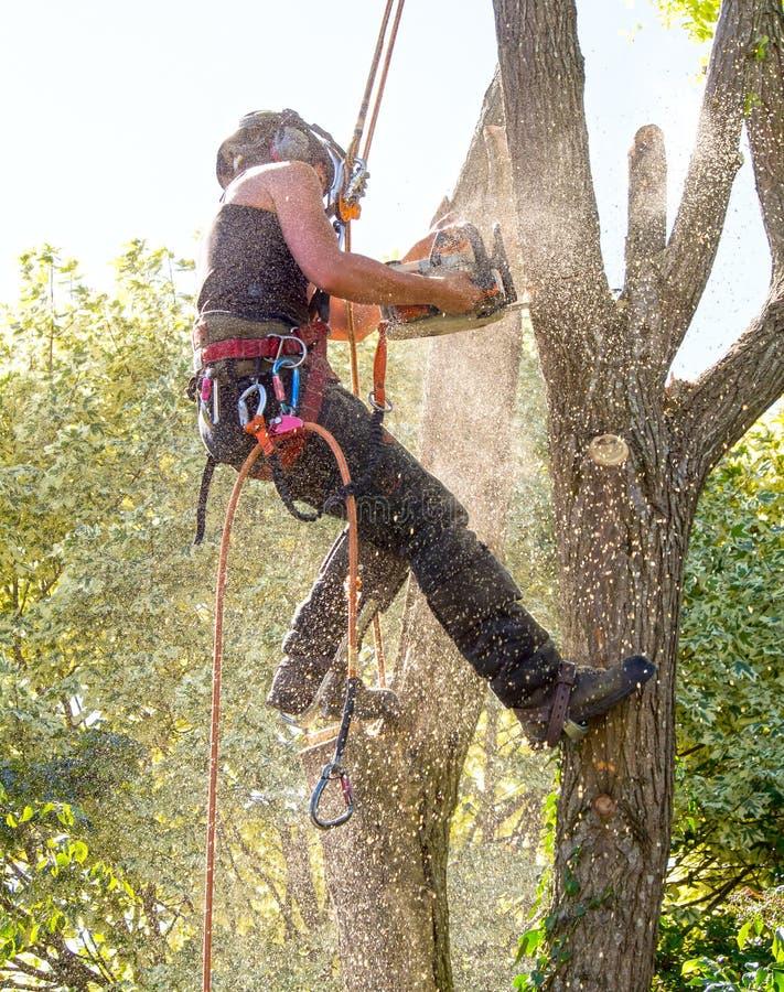 Baum-Chirurg bedeckt mit Sägemehl stockfoto