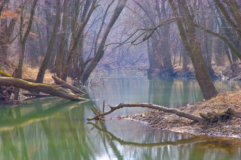 Baum deckte Fluss ab lizenzfreie stockbilder