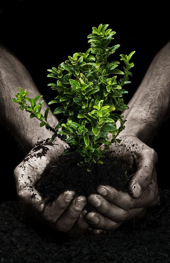 Baum in den Händen stockbilder
