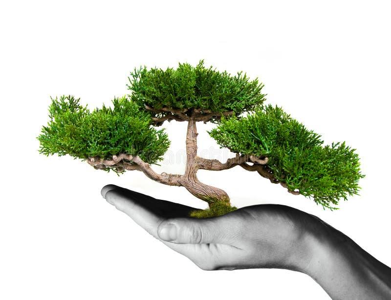 Baum in den menschlichen Händen lizenzfreie stockfotografie