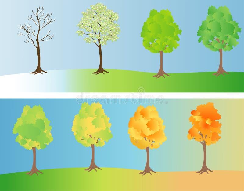Baum an den verschiedenen Jahreszeiten vektor abbildung