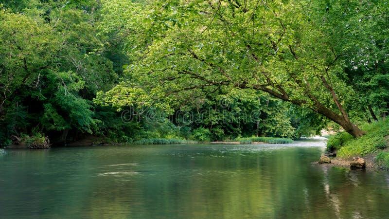Baum, der über Nebenfluss sich lehnt stockbild