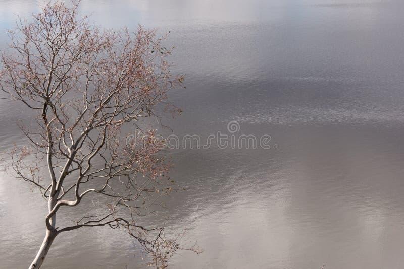 Baum, der über See an einem bewölkten Tag sich lehnt stockbilder